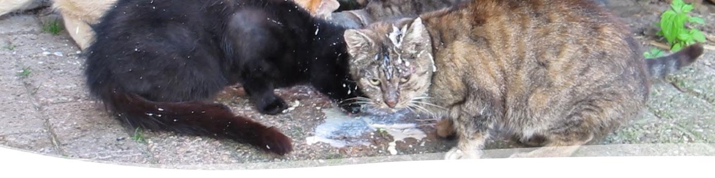 boerderij Ruimzicht-melk-katten
