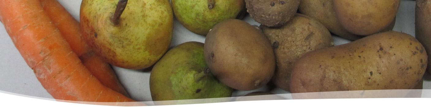 groentepakket-Tuinderij Ruimzicht