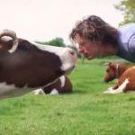 Caring-Farmer_BD Boerderij Ruimzicht