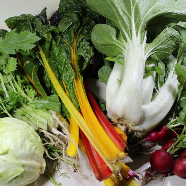 groentepakket-biologisch_BD Boerderij Ruimzicht